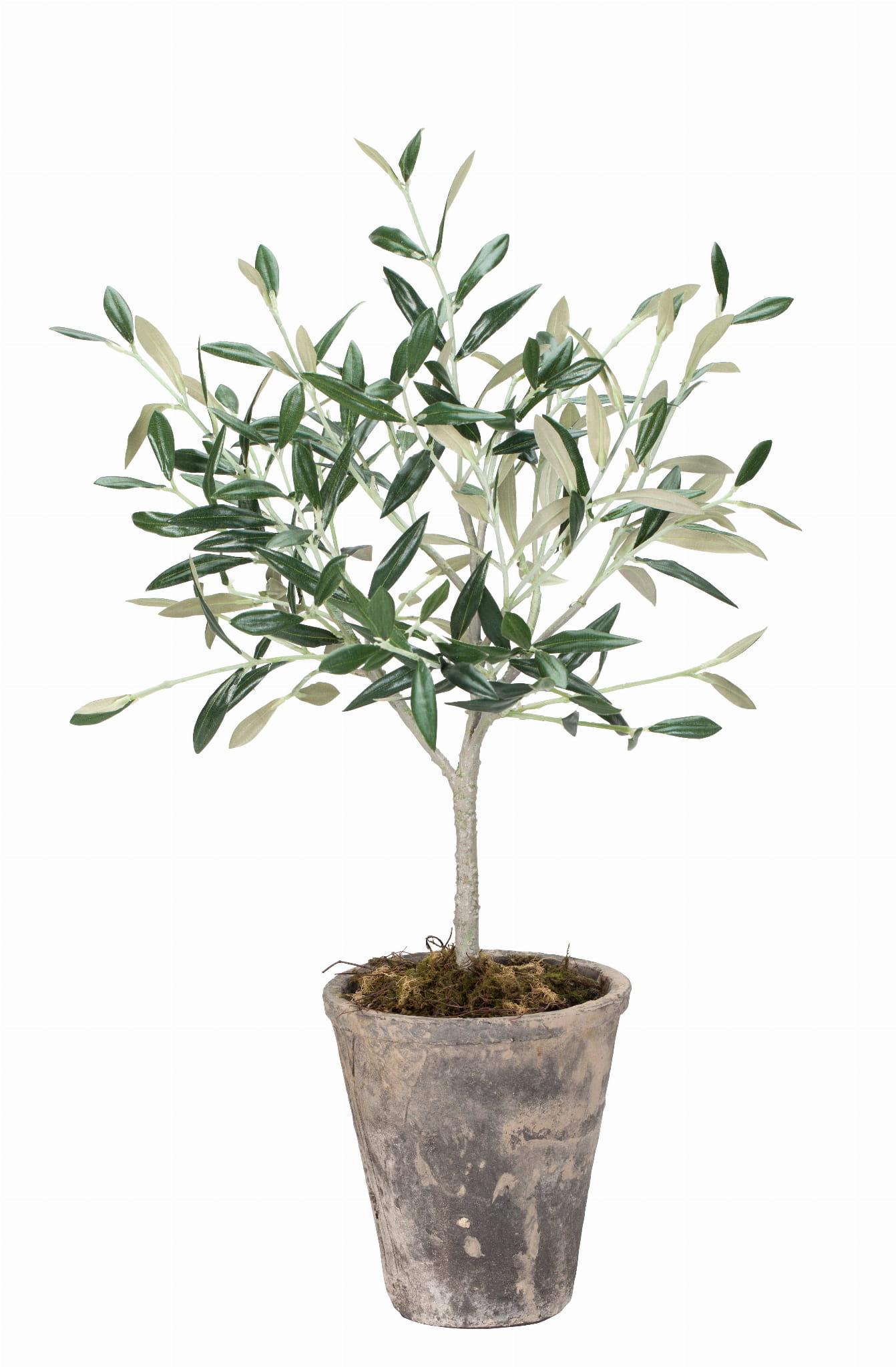 Drzewko oliwne oliwka lene bjerre 44 cm designbywomen - Olivo en maceta ...